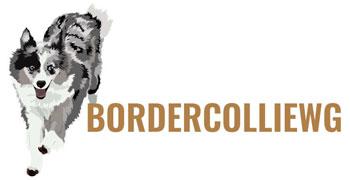 Border Collie Welpen und Border Collie Deckrüden aus Ostfriesland – die BORDERWG